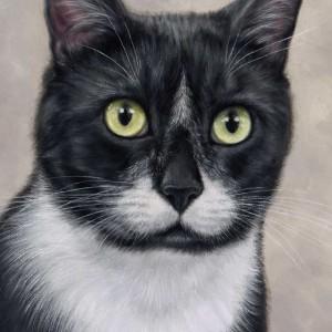 cat1-300x300